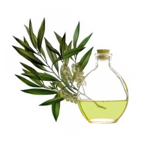 Moadiario aceite-arbol-de-te-propiedades-y-beneficios-planta